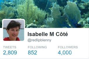 twitter-milestone4